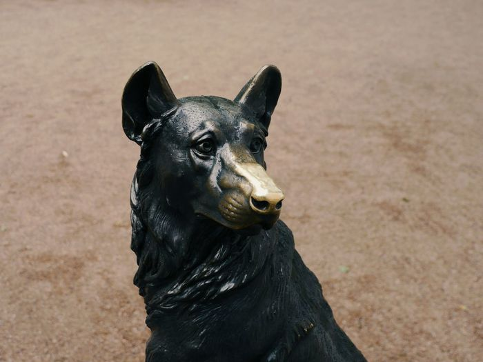 Close-up portrait of a dog sculpture