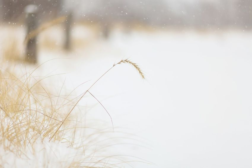 the snowy beach Snowy Cold Winter Cold Temperature Canada Lakeshore Snow Grass Nature No People Day Close-up Outdoors Freshness
