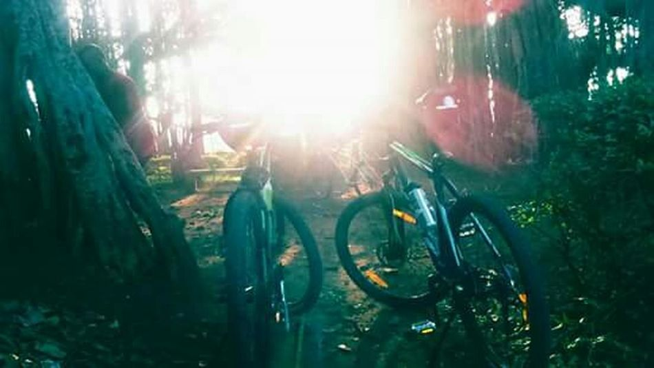 Cycleshot Outdoors Sunrays! :) Beauty In Nature