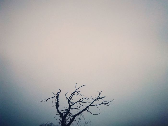 Close-up of silhouette tree against sky