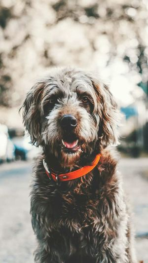 I love this photo🐶 Dog Pets Portrait One Animal Domestic Animals Looking At Camera Black Color Wet Outdoors No People Day Mammal Animal Themes Protruding Water Retriever Anandsphotos📷🏻 Likes4likes Likeforfollow Likesforlikes Likeforlike Like4like