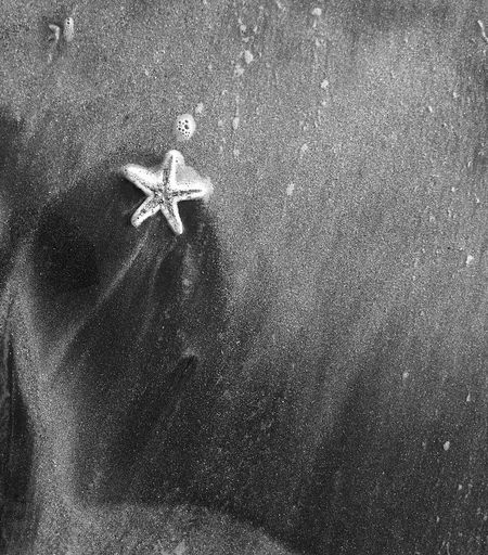 Star Beach Outdoors No People Animal Themes Nature Day Sand Close-up Starfish  Starfish At Beach Oceanwave Starshape Nocolor Blak And White EyeEmNewInHere Beauty In Nature