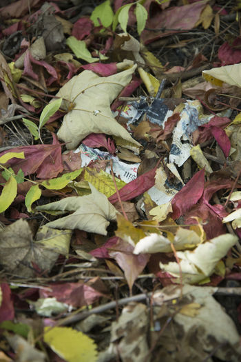Leaves and scraps of newspaper Amager Fælled Autumn Autumn colors Nature Trees Urban Nature Close-up Forest Leaves Newspaper No People Outdoors