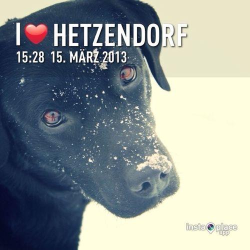Hanging Out Dogs My Beloved Black Labrador