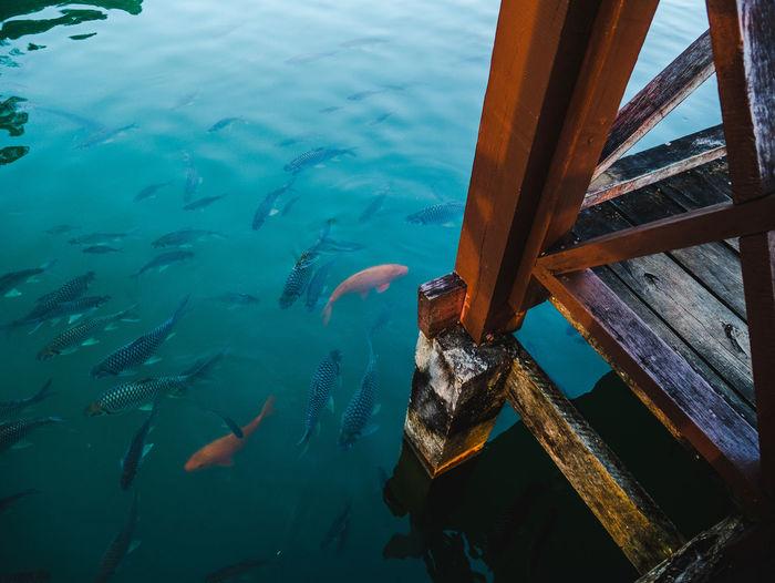Fish Water Sea