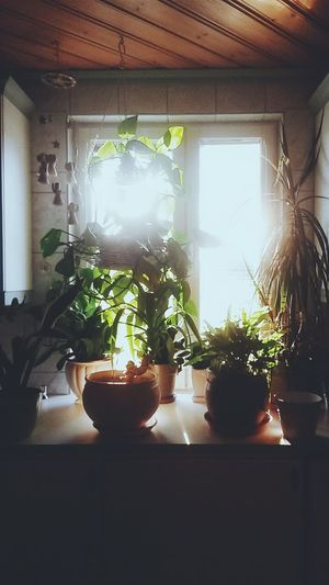 Potted plants in pot