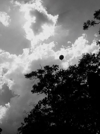 Balloon Balloon Release  Baby Boy Baby Boy Miscarriage Miscarriage Awareness MiscarriageAwareness Tree Low Angle View Sky Cloud - Sky Silhouette Growth Nature Beauty In Nature No People Outdoors Day Tranquility Son