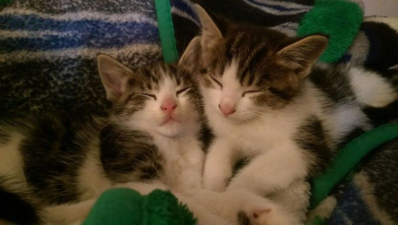 Twin baby boys icarus and leonidas Cute Cats Cat♡ Cat Animal Photography Pet Photography  Cute Animals Kittens <3 Kittens Cuddlin Kittens My Cute Kittens