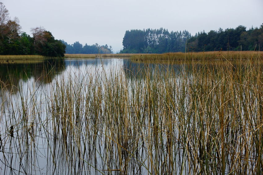 A quiet autumn day Beauty In Nature Day Grass Growth Lake Landscape Nature No People Outdoors Plant Scenics Sky Tranquil Scene Tranquility Tree Water