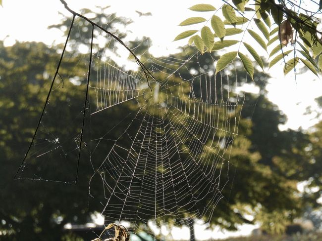 Spider Web Web Focus On Foreground Nature Close-up No People Day Outdoors Fragility Animal Themes Dew Tranquility