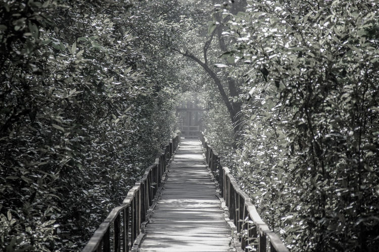 Boardwalk amidst trees