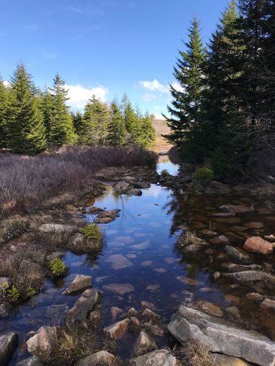 Wilderness Area Trail Water Plant Tree Reflection Sky Nature Tranquility Beauty In Nature Tranquil Scene Outdoors Idyllic Scenics - Nature