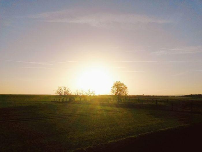 Sun shining through trees on landscape