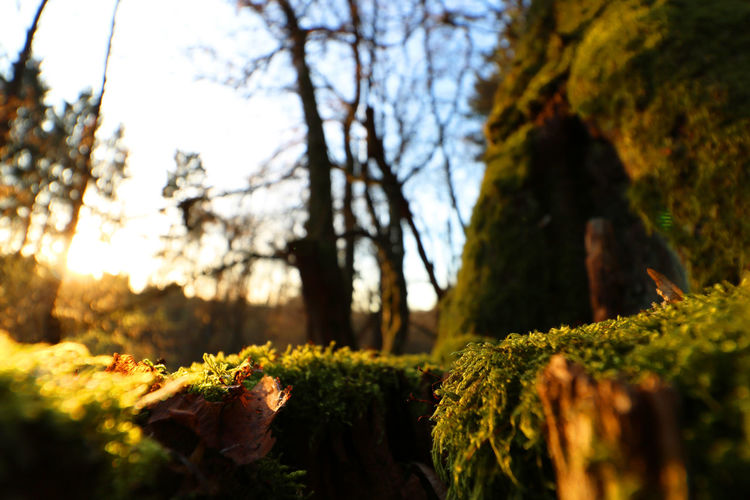 Autumn Beauty In Nature Close-up Forest Growth Moss Nature Outdoors Selective Focus Tree Tree Trunk First Eyeem Photo
