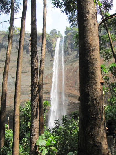 Waterfall Uganda  Sipi Falls Water Pouring Falling Lanfscape Touristic Destination Low Angle View Long Exposure Dramatic Nature No People Richness Of Nature Source Of Life Beauty In Nature Scenics - Nature Environment Flowing Water Power In Nature Flowing Motion Tree Plant Land Outdoors
