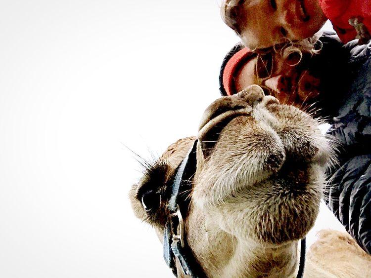 Selfie ✌ Selfies Selfportrait Self Portrait Camel Camels Farm Kentucky  Farm Life Country Life