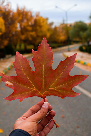 Autumn King of the Seasons EyeEm Eyeemphotography Foliage Street Streetphotography Leaf Sky Sky And Clouds Iran Kermanshah Autumn Autumn colors Human Hand Maple Leaf Change Holding Maple Red Close-up Sky Personal Perspective Autumn Collection