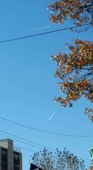 From Top To Bottom How High Will That Jet ? Low Angle View Outdoors Day Clear Sky Tree Airplanes Cable Blue Telephone Line