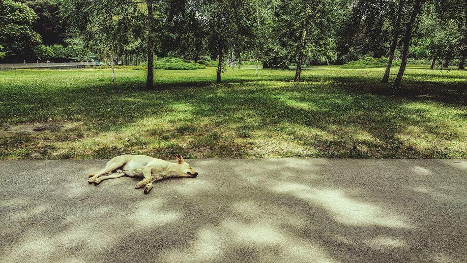 Park Dunavskipark Novi Sad Serbia Dog Sleeping Dog Trees Grass Yellow Dog  Mobile Photography Samsungphotography S6edge+