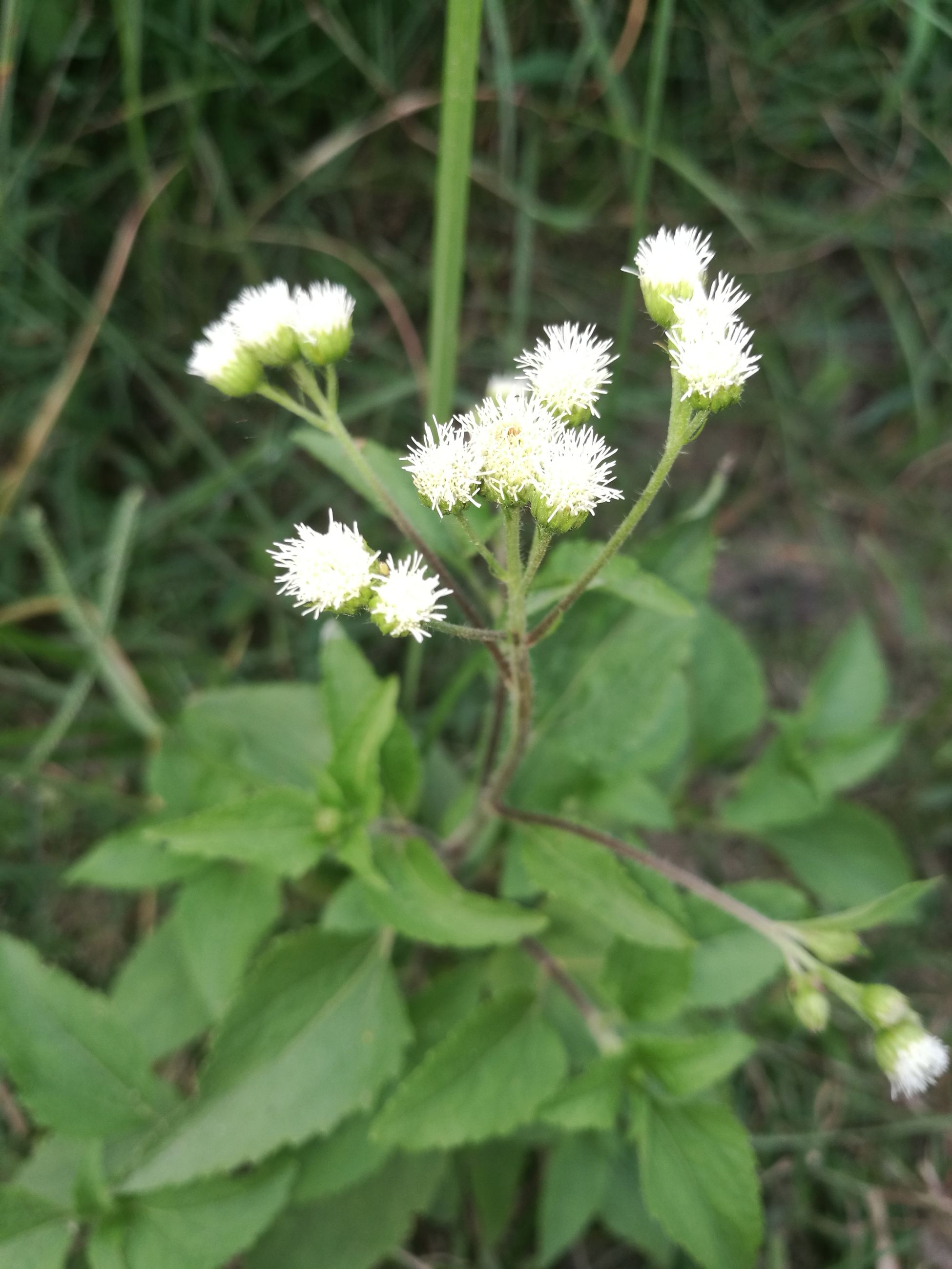 flower, nature, growth, white color, plant, fragility, beauty in nature, freshness, flower head, blooming, no people, outdoors, day, close-up