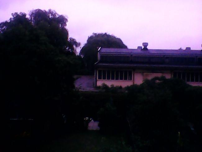 Brzydka pogoda :( Sad Trees Bad Wether Boring......