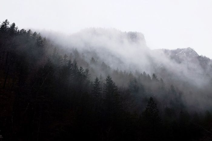 Tree Nature Tranquility Fog Beauty In Nature Day Forest Scenics Growth Outdoors Tranquil Scene Mist No People Landscape Hazy  Slovenia Logarska Dolina