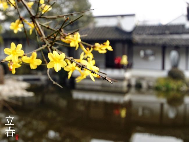 立春 Chinese Seasonal Division Points Beginning Of Spring Chinese Garden Flowers EyeEm Nature Lover Landscape Engoylife Taking Photos
