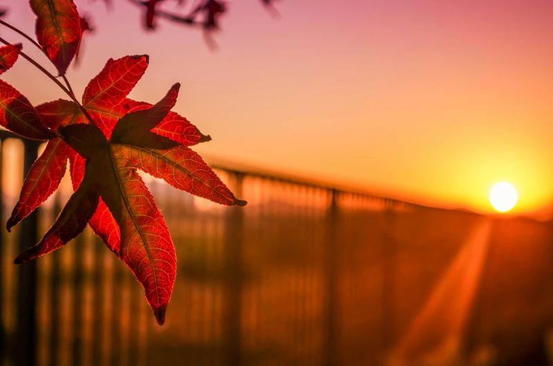 Fence On Field Against Sky During Sunset With Autumn Leaves In Foreground