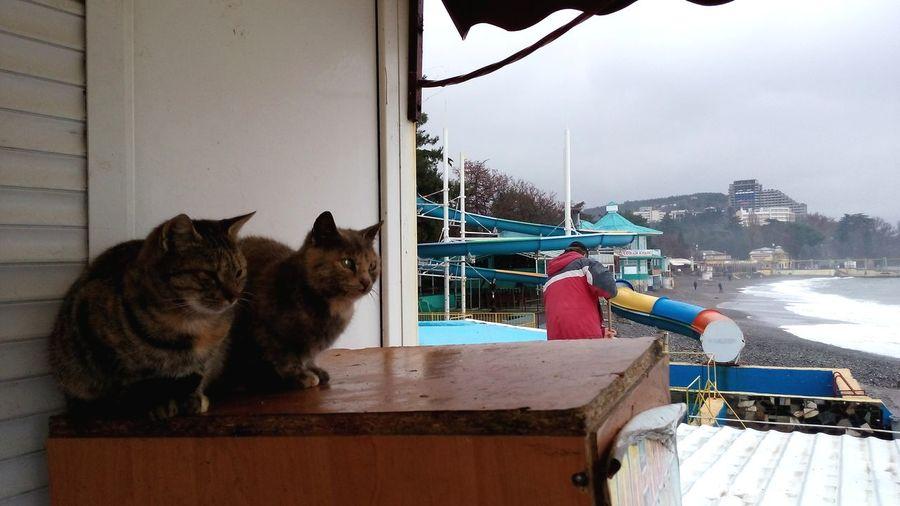 Котаны - местная мафия Cat Sea Crimea Existance