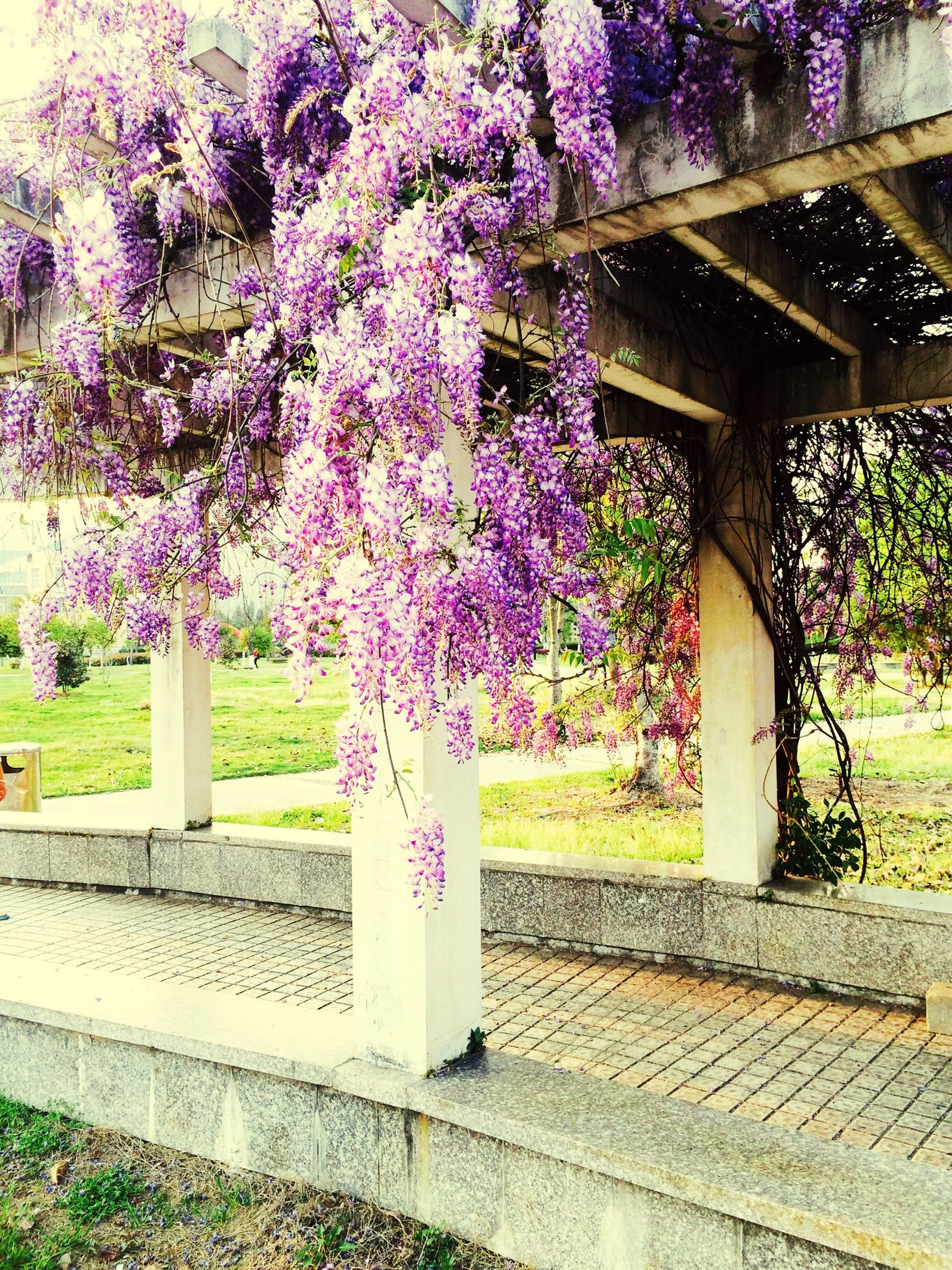 flower, growth, tree, freshness, plant, park - man made space, beauty in nature, nature, built structure, fragility, building exterior, architecture, formal garden, day, outdoors, pink color, sunlight, no people, in bloom, blooming