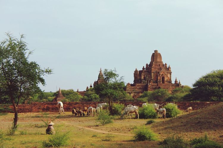 Bagan Ancient Civilization Place Of Worship Business Finance And Industry Old Ruin Religion Architecture Building Exterior Built Structure Historic Restoring Historic Building Civilization Brick