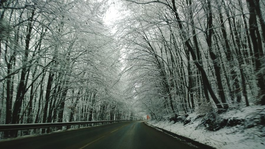 The Way Forward Tree Winter Road Snow Weather Transportation