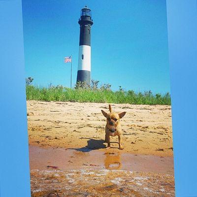 Salty dog Dailyzigga Lighthouse Longisland Lovemypup