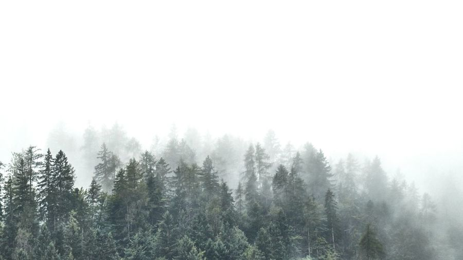 Tree Forest Cold Temperature Pine Tree Nature WoodLand Pinaceae Fog No People Outdoors Beauty In Nature Sky Spruce Tree Freshness Wanderlust in Tirol , Austria Lost In The Landscape Perspectives On Nature