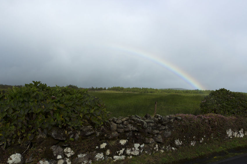 Azores EyeEm Nature Lover Portugal São Jorge Beauty In Nature Cloud - Sky Day Double Rainbow Growth Idyllic Nature No People Outdoors Rainbow Scenics Sky Tranquility Tree