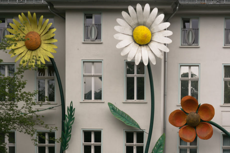 Architecture Big Flower Bloomy Building Exterior Colorful Day Flower Flowers No People Outdoors Red Sunflower White Window Yellow