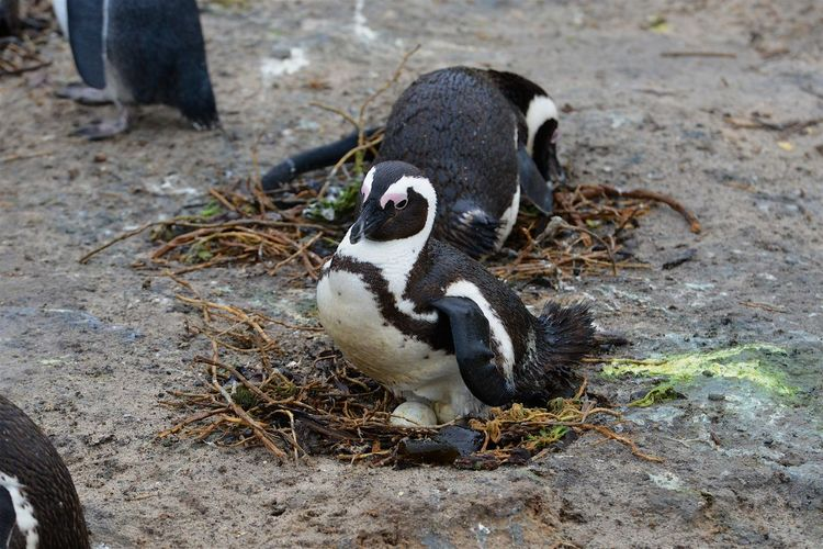 High angle view of penguin on land