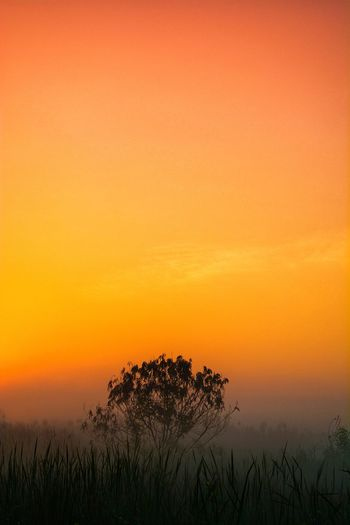 Silhouette trees on landscape against romantic sky at sunset