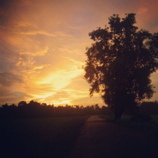 Wake up fellas Thisday Walkingalone Sunsup Allnatureshots