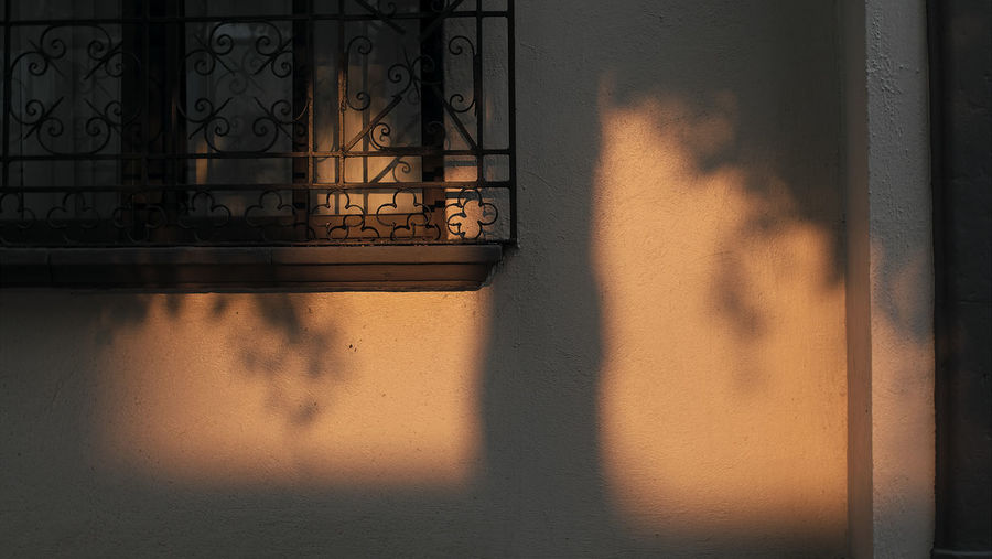 Shadow of a tree at sunset