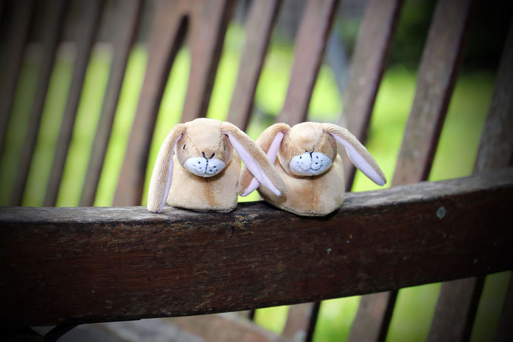 Baby Bench Rabbits The Week On EyeEm Animal Themes Art And Craft Babies Babies Booties Close-up Day Feet Nature No People Outdoors Outside Perching Shoes