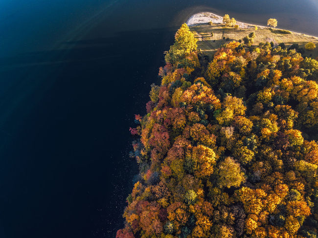 Nature Change Plant No People Autumn Tree High Angle View Water Beauty In Nature Architecture Day Built Structure Outdoors Growth Yellow Sea Building Exterior Orange Color Scenics - Nature Lithuania Autumn