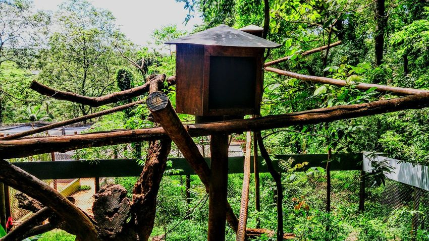 Birds Houses In The Zoo Zoo Things That Are Green Wood House Check This Out Xperiaz Nature Everywhere Simple Moment Mobile Photography