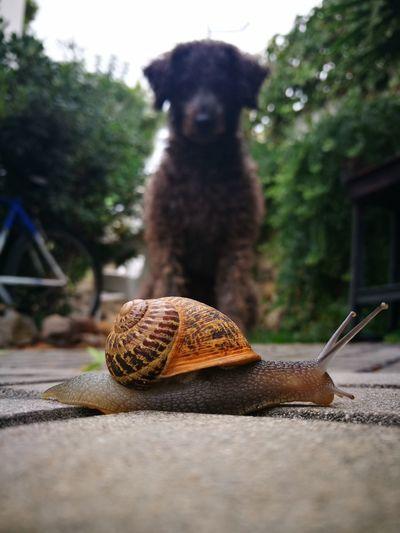 Close-up of dog looking at snail