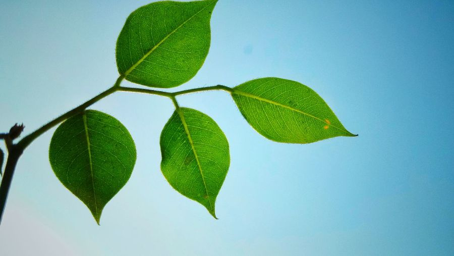 Close-up of green plant against clear sky