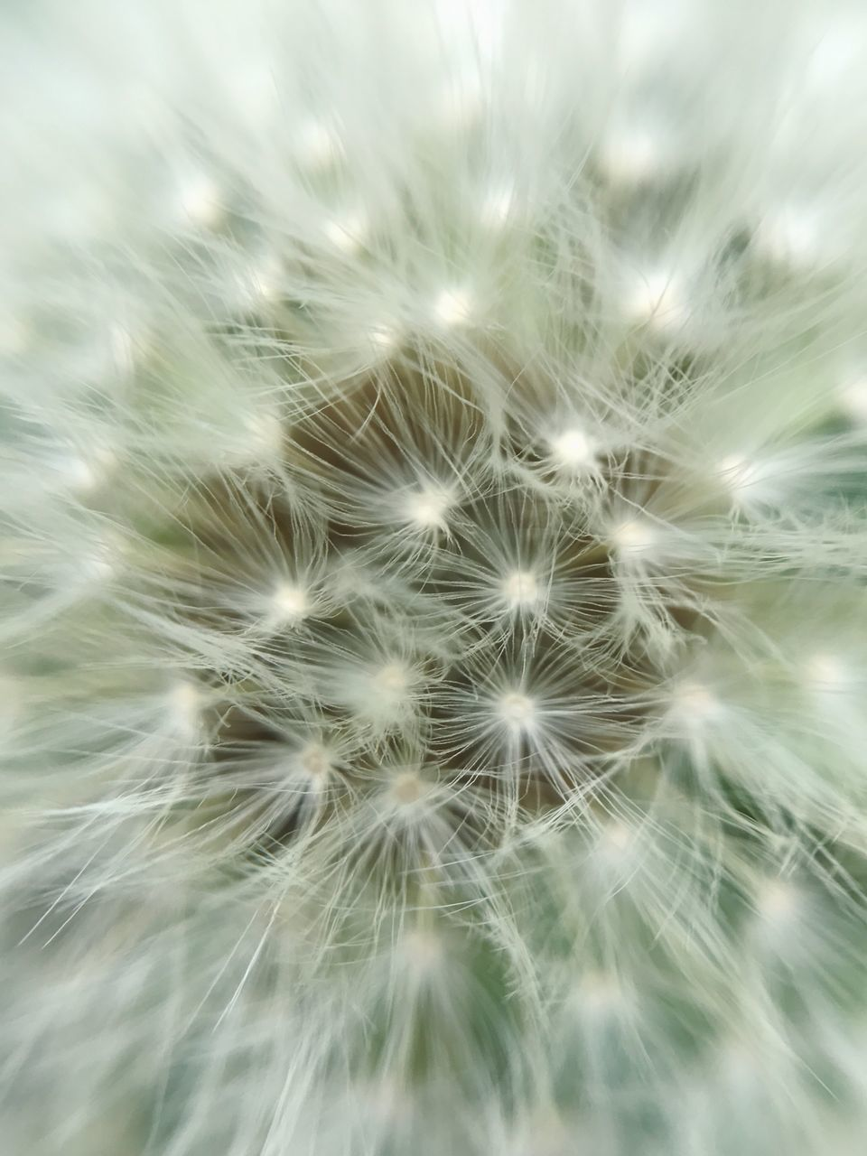 dandelion, dandelion seed, flower, nature, fragility, softness, growth, close-up, freshness, plant, beauty in nature, uncultivated, delicate, selective focus, no people, full frame, outdoors, flower head, hope, day