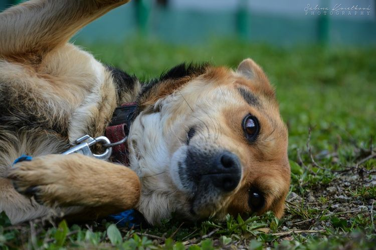 ♡ Little lovely female dog from the shelter ♡ Dog Eyes Animal Grass Nature Relaxing Cute Pet Photo Photography
