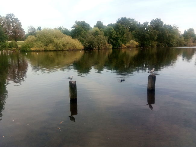 Water Reflection Lake Trees Outdoors Nature Sky Day No People GreenAnimal Themes Perching Birds Kensington Gardens Beauty In Nature Animals In The Wild Birds Perched Perched Birds Tranquil Landscape