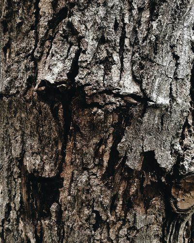 Backgrounds Bark Beauty In Nature Close-up Cracked Day Full Frame Knotted Wood Nature No People Outdoors Pattern Plant Bark Rough Textured  Tree Tree Trunk