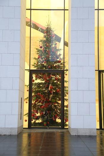 Behind Glass Behind Glassdoors Celebration Christmas Tree Growth Illuminated Indoors  No People Tree